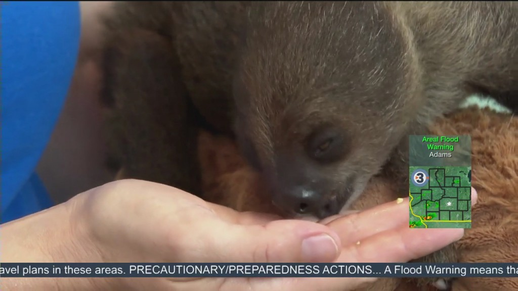 Newshounds Now: Squirrels Go Nuts, Newborn Sloth, Baby Hippo Learns To Swim