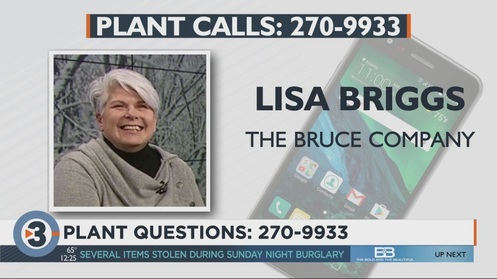 Lisa Briggs With The Bruce Company Answers Your Plant And Garden Questions