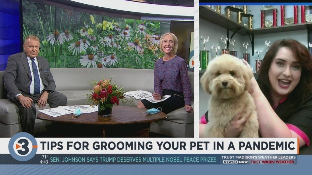 Groomer Shares Tips On How To Groom Your Pet Amid The Pandemic