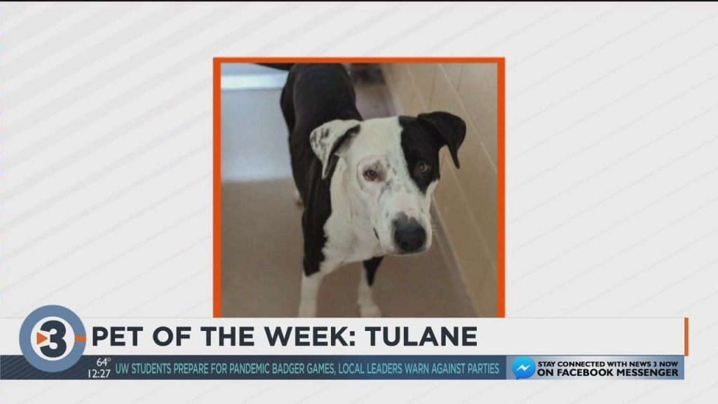 Meet The Pet Of The Week: Tulane