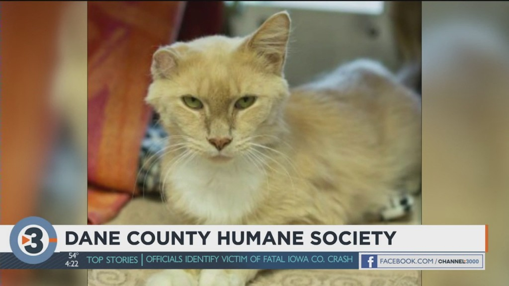 Meet The Pet Of The Week: Chad