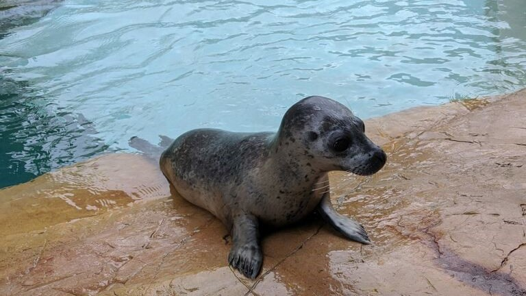 Sammye the seal