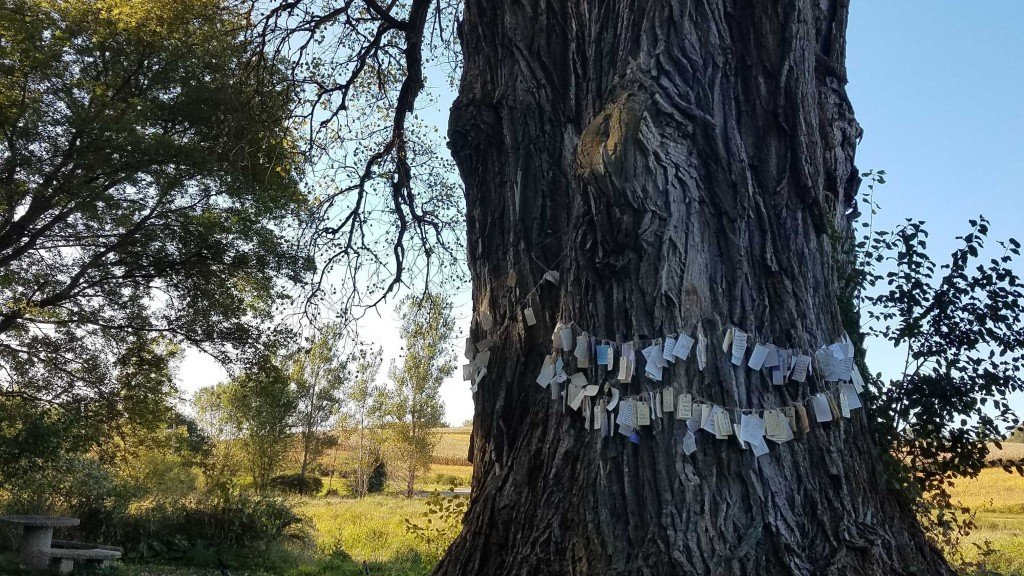 tree with wishes hung across them
