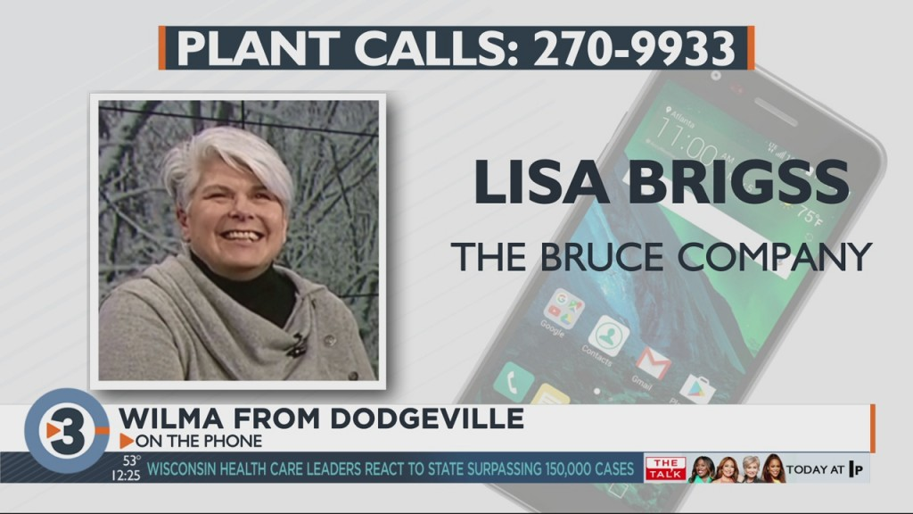 Lisa Answers Viewers Questions About Plants, Gardening