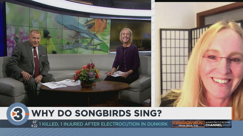 Why Do Songbirds Sing?