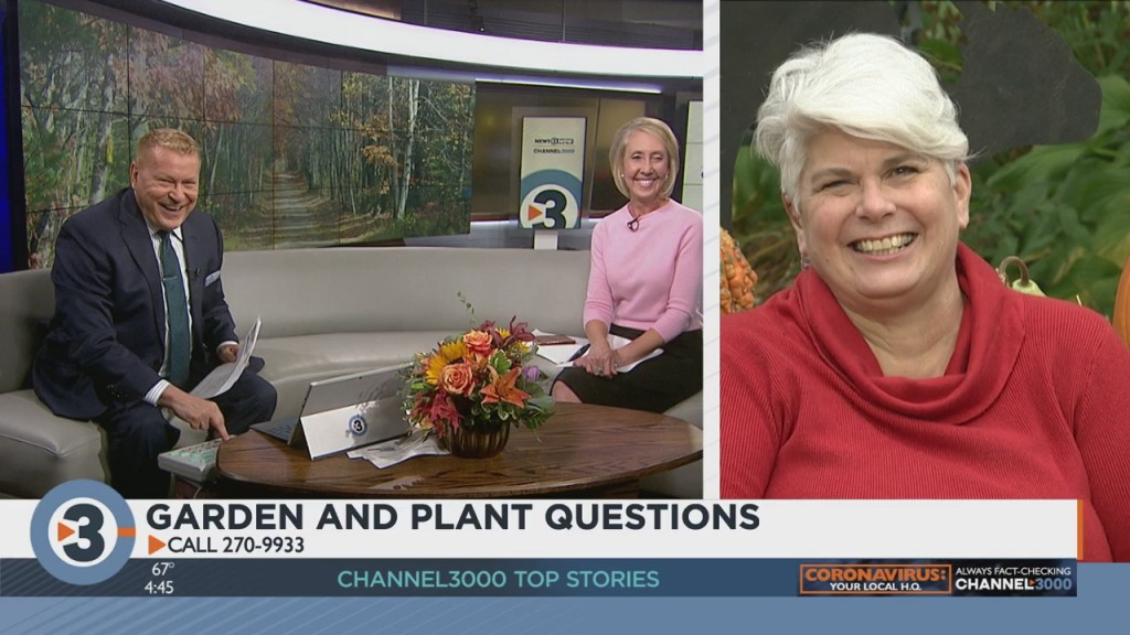 Lisa Briggs Answers Your Garden, Plant Questions