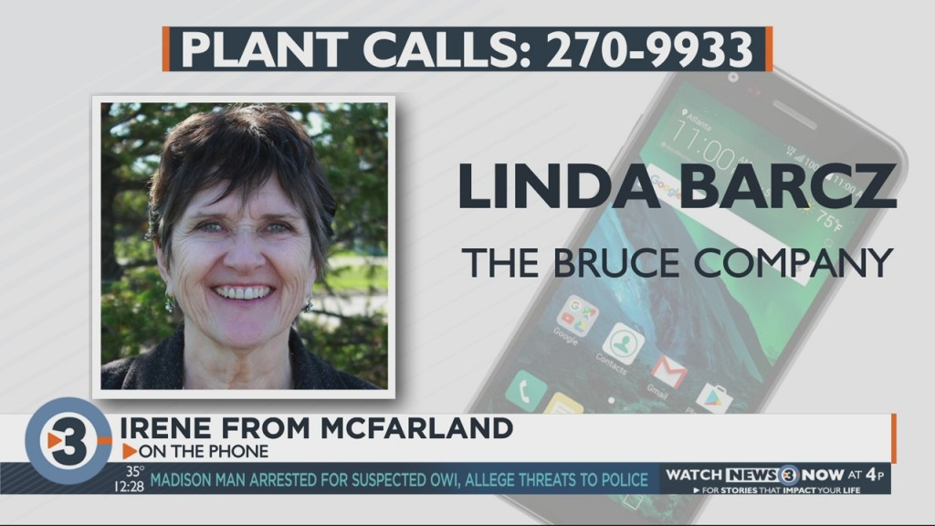 Linda Barcz Answers Your Plant And Garden Questions On Air