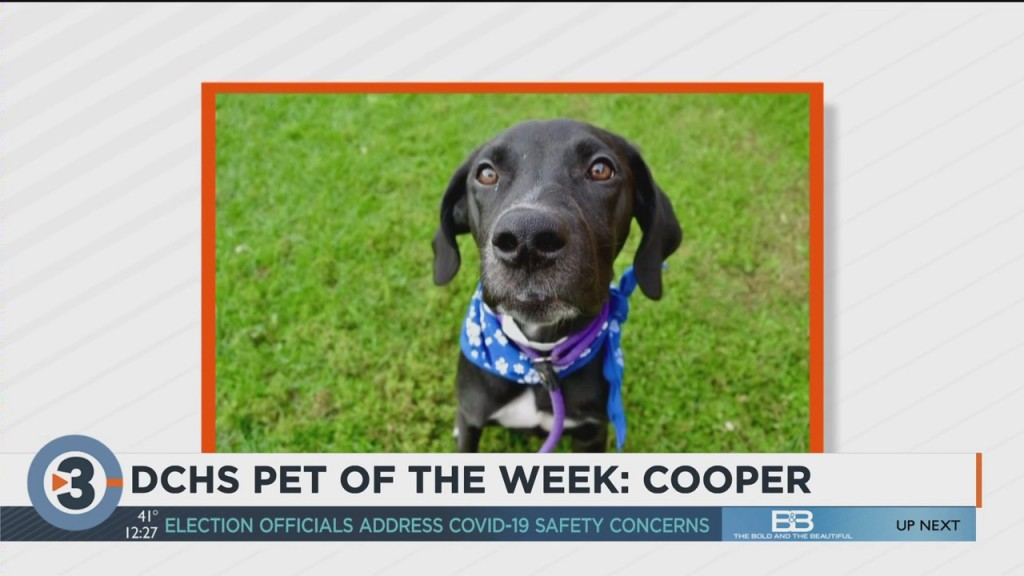 Meet Cooper: The Cute Pup Up For Adoption Through The Dane County Humane Society