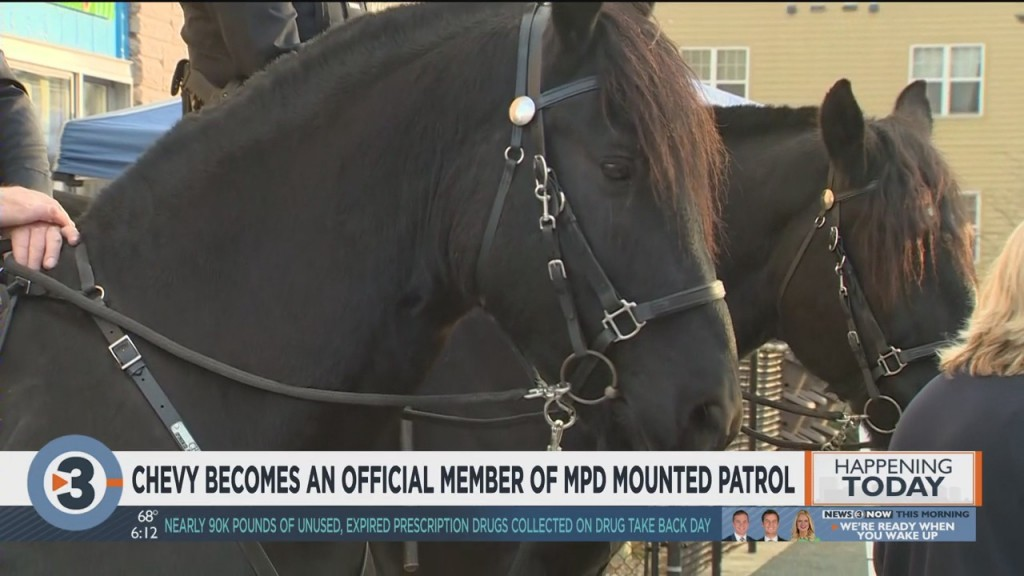 Chevy Becomes Official Member Of Mpd Mounted Patrol