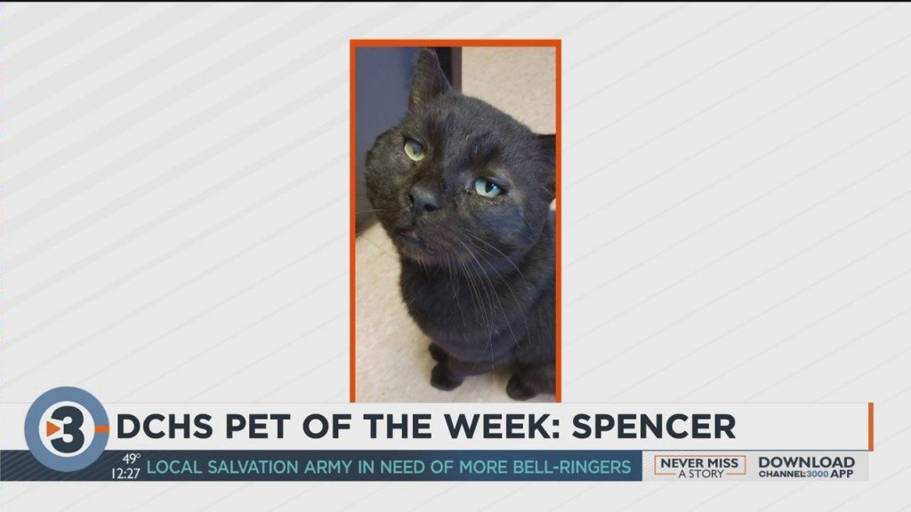 Meet The Pet Of The Week: Spencer