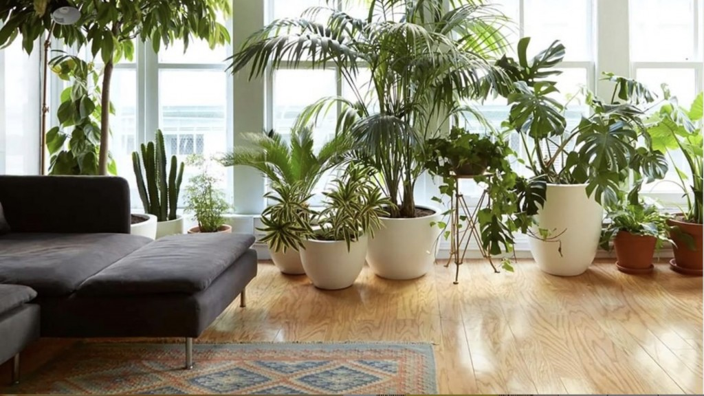 Apartment full of plants