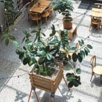 interior of the atrium with plants and tables