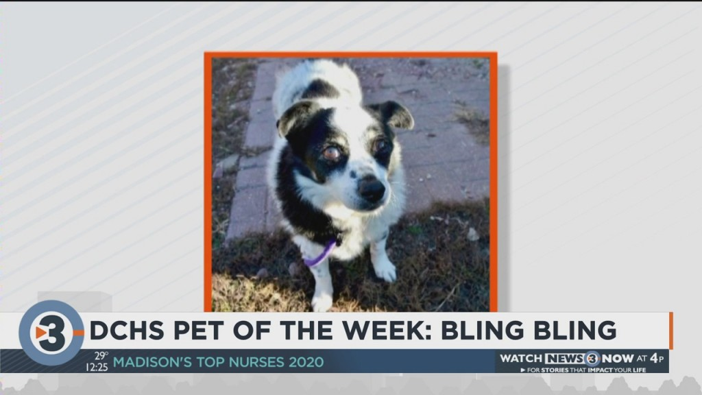Meet The Pet Of The Week: Bling Bling