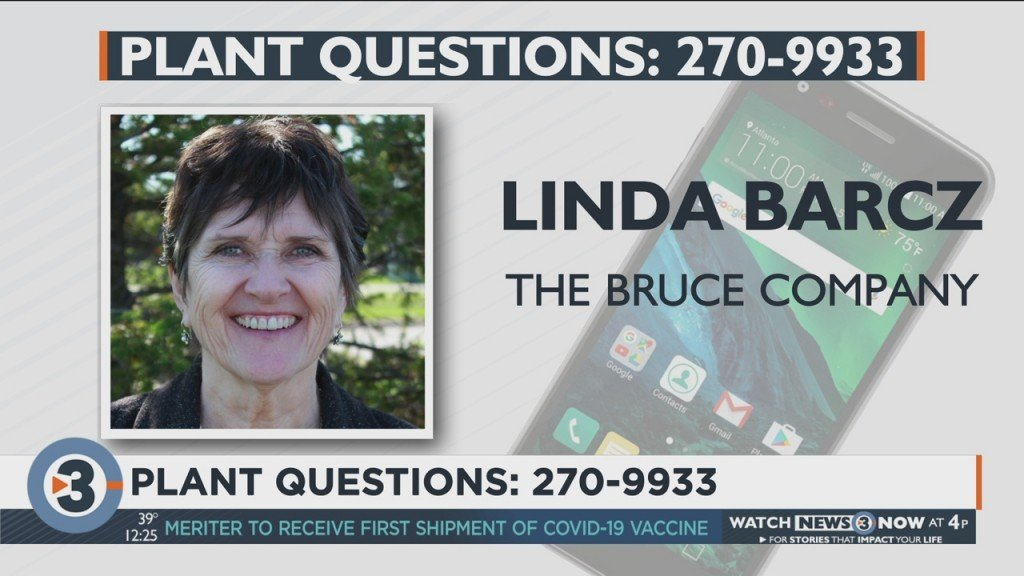 Linda Barcz Answers Your Plant And Garden Questions.