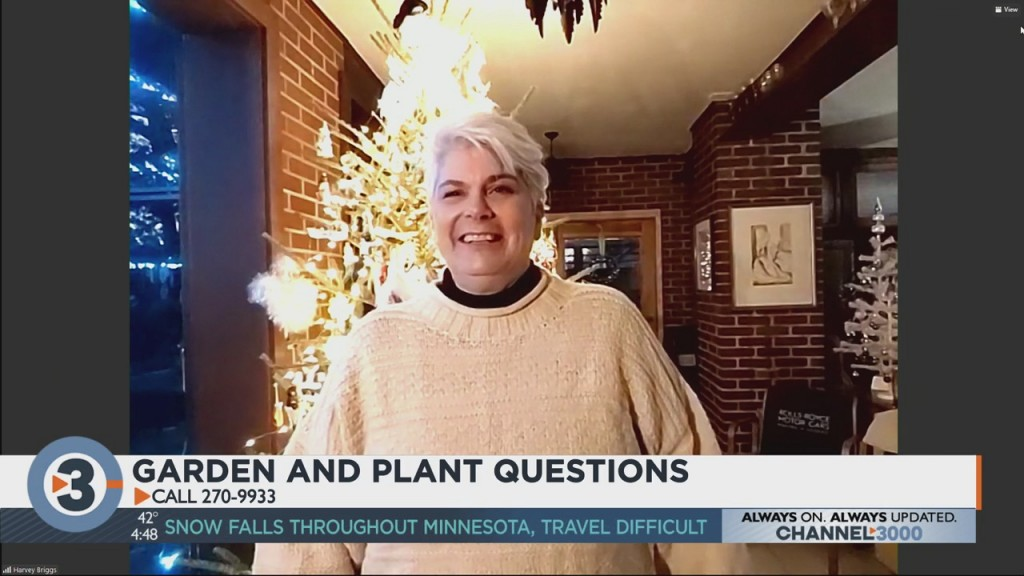 Lisa Briggs Answers Your Plant Questions