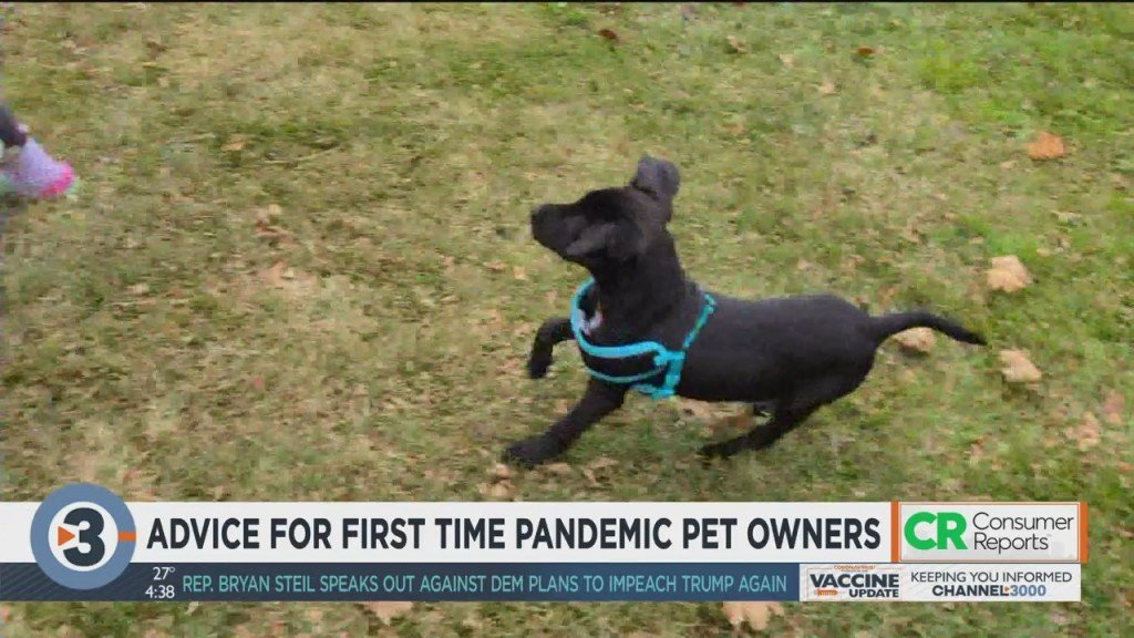 Consumer Reports: Advice For First Time Pet Owners