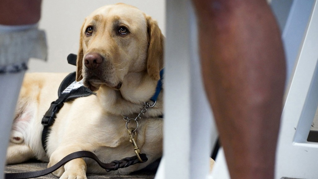 How Do Travelers Feel About Pets On Planes?