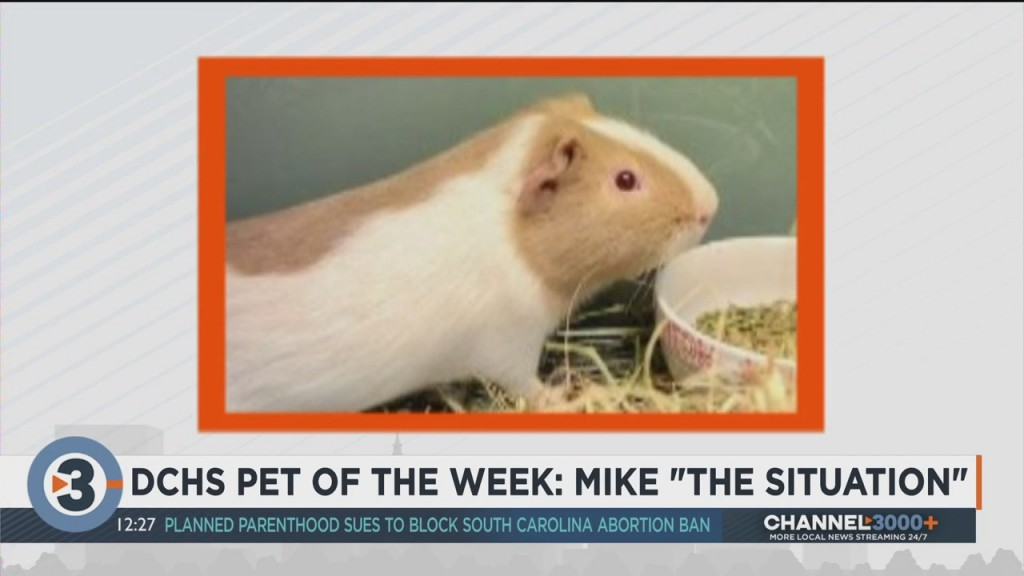 Meet The Pet Of The Week: Mike 'the Situation'