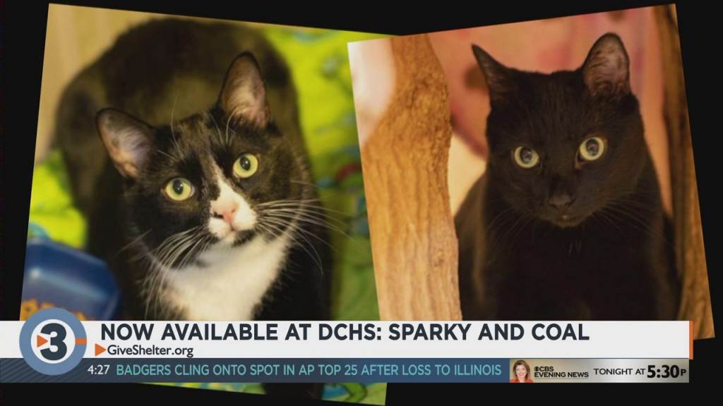 Meet The Pets Of The Week: Sparky And Coal