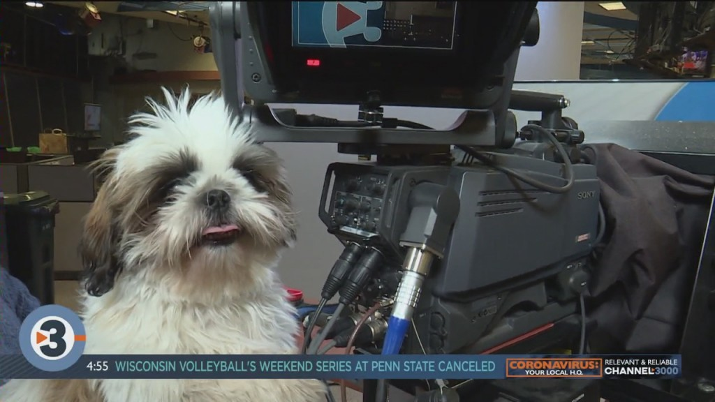 Newshounds Now Update: Intern Oliver Gets A Full Introduction
