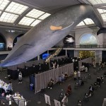 Whale Of A Time: Nyc Offers Walk Up Vaccinations For All