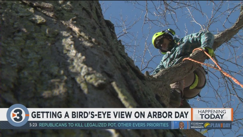 Getting A Bird's Eye View On Arbor Day