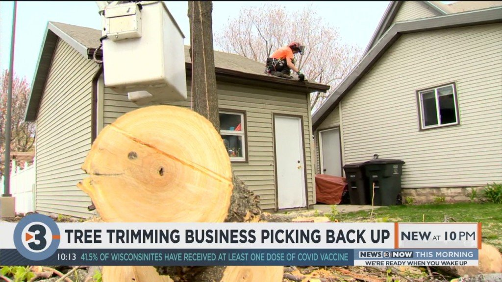 Tree Trimming Business Picking Back Up