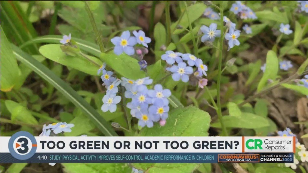 Consumer Reports: Too Green Or Not Too Green?