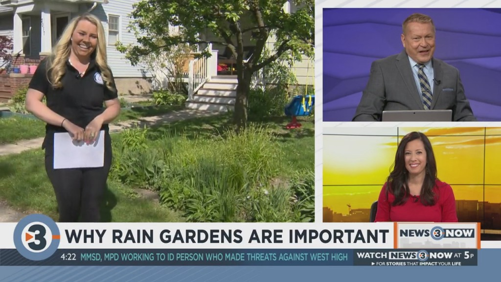 Why Rain Gardens Are Important