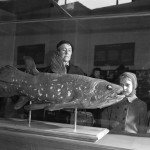 Weird 'living Fossil' Fish Lives 100 Years, Pregnant For 5