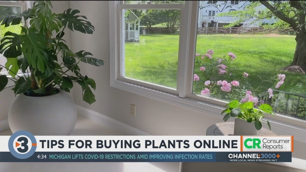 Consumer Reports: Tips For Buying Plants Online
