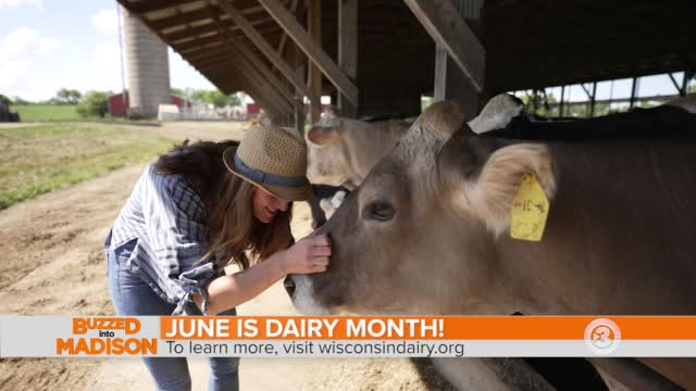 Buzzed Into June Dairy Month At Mayer Homestead Farm