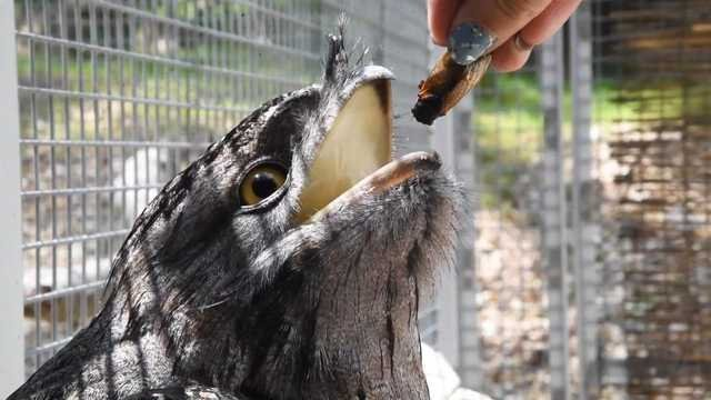 The animals at the Maryland Zoo in Baltimore are eating really well these days -- all thanks to the cicadas.