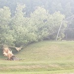 A Huge Tree On Golf Road In Delafield Uprooted By Storms