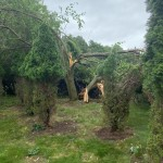 Town Of Middleton Tree Damage On Goth Road Via Paul Chelevold