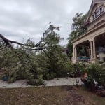 A Large Tree In Watertown Toppled By Winds From A Strong Storm Via Brian Johnson