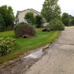 Multiple Small Trees Uprooted By Strong Winds In Verona Via Sue Faust