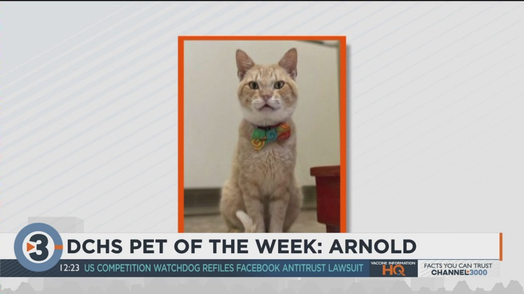 Meet The Pet Of The Week: Arnold