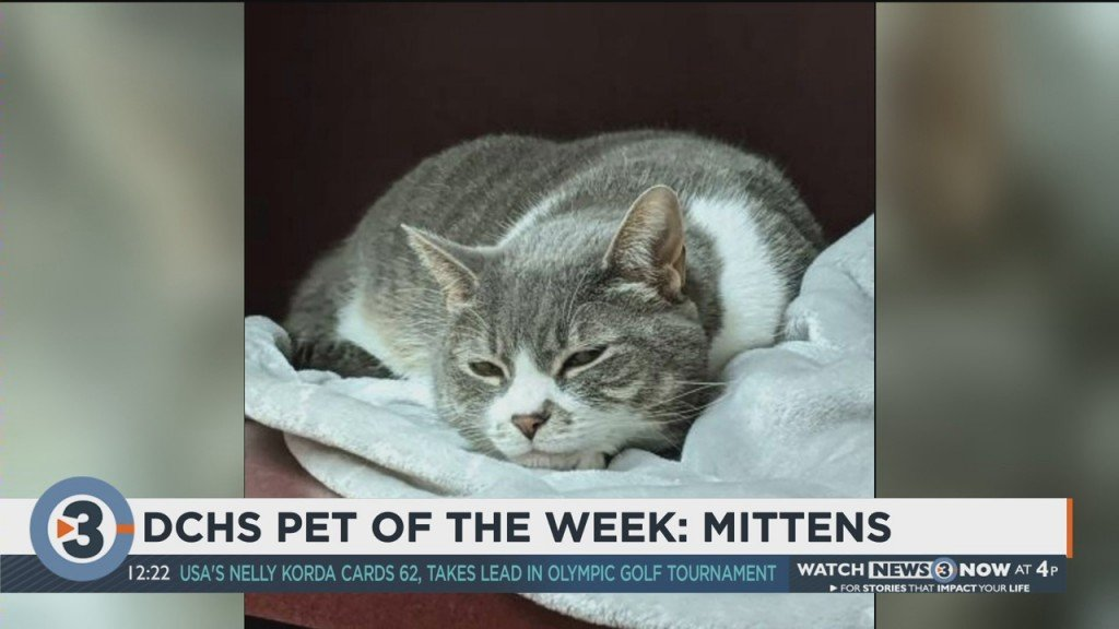 Pet Of The Week: Mittens