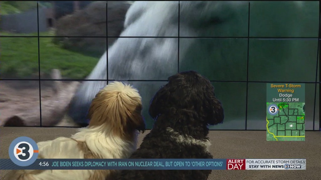 Newshounds Now Update: Annual Weigh In At The London Zoo
