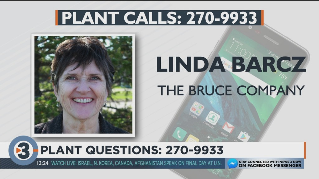 Linda Barcz Answers Your Plant Quesitons