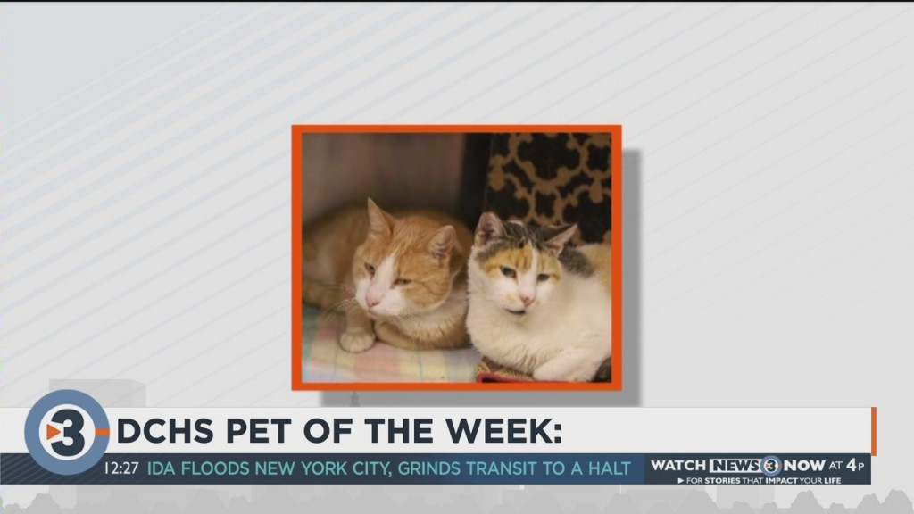 Meet The Pets Of The Week: Aunt Bee And Opie