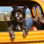 Should He Stay Or Should He Go? Deciding Whether To Take Your Pooch Along On Your Road Trip