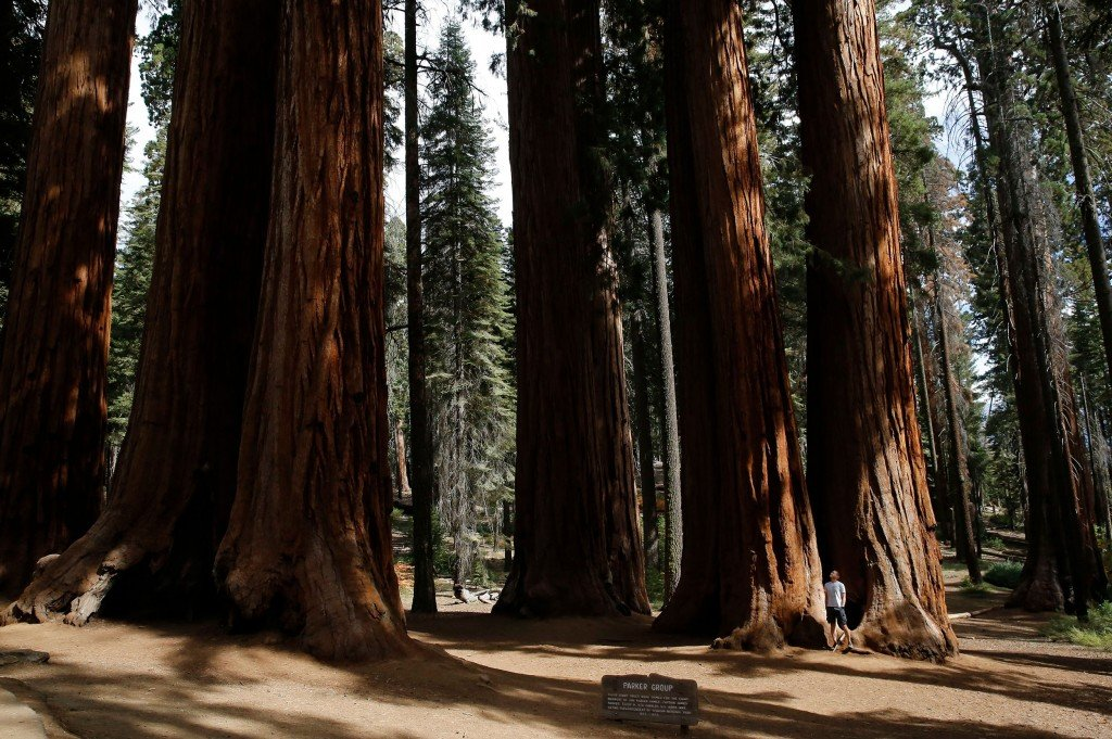 Sequoia National Park In California, Three Rivers, Usa 16 Oct 2019