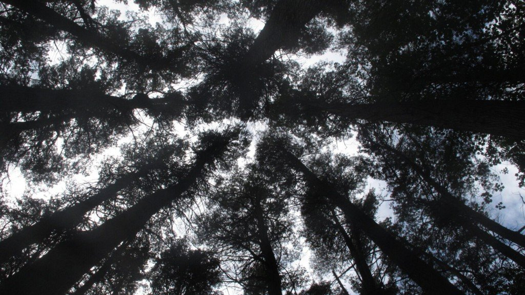 Polluters Pick Up Tab For Restoration Of Threatened Cedar