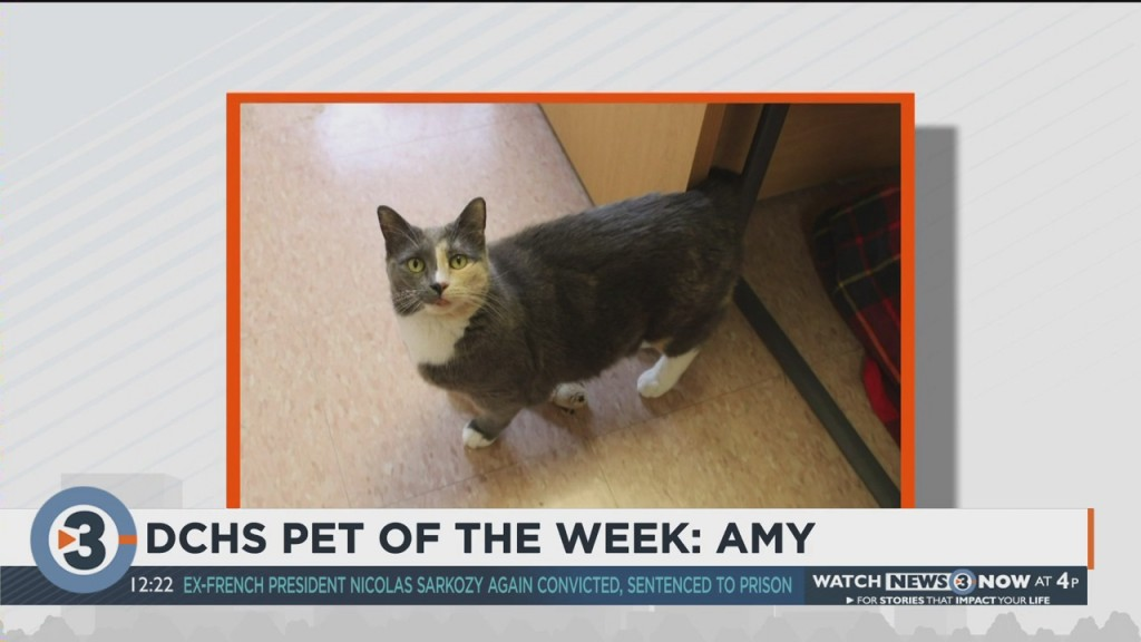 Meet The Pet Of The Week: Amy