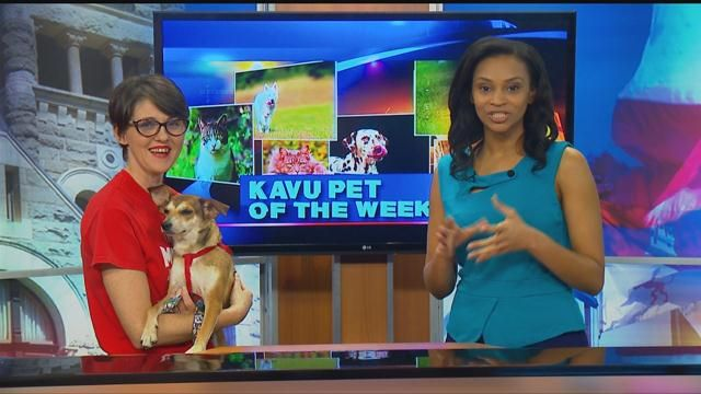Hillcrest Pet of the Week