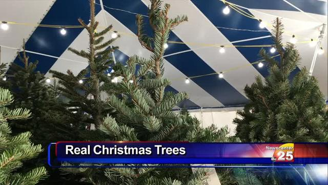 Last call for a real Christmas tree at Holiday Hills