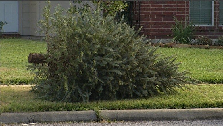 City to Begin Collecting Christmas Trees on Monday