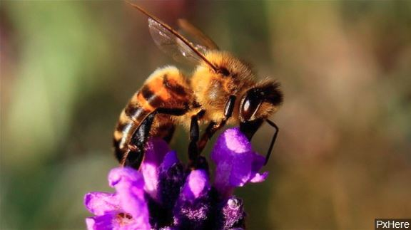 More than 500,000 bees in Texas killed in act of vandalism
